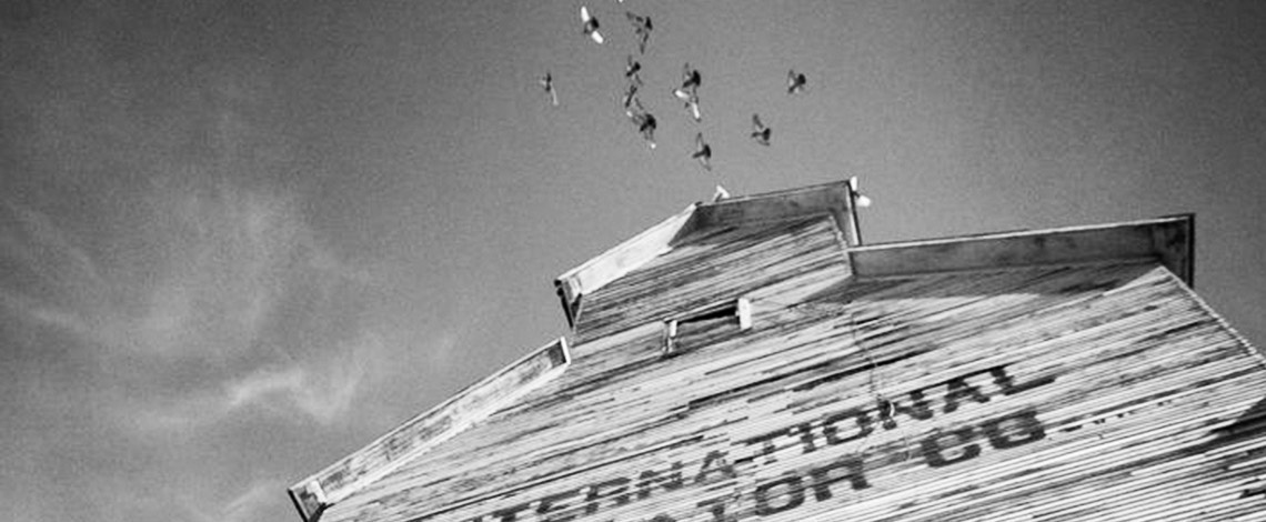 Pigeons flying overhead at grain elevator