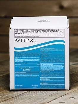 Avitrol Double Strength Whole Corn